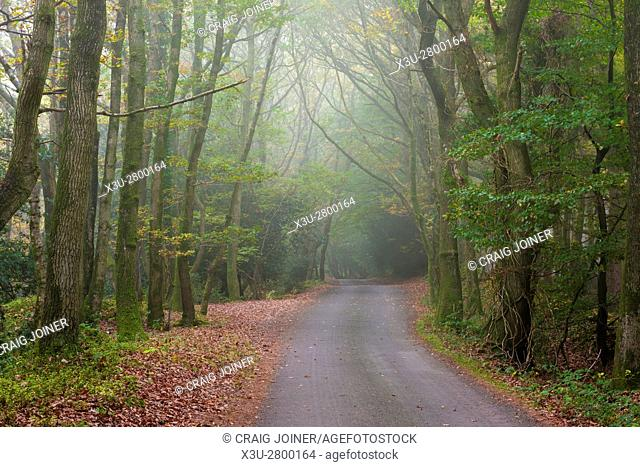 Country lane though autumn woodland on the Quantock Hills near Nether Stowey Somerset England