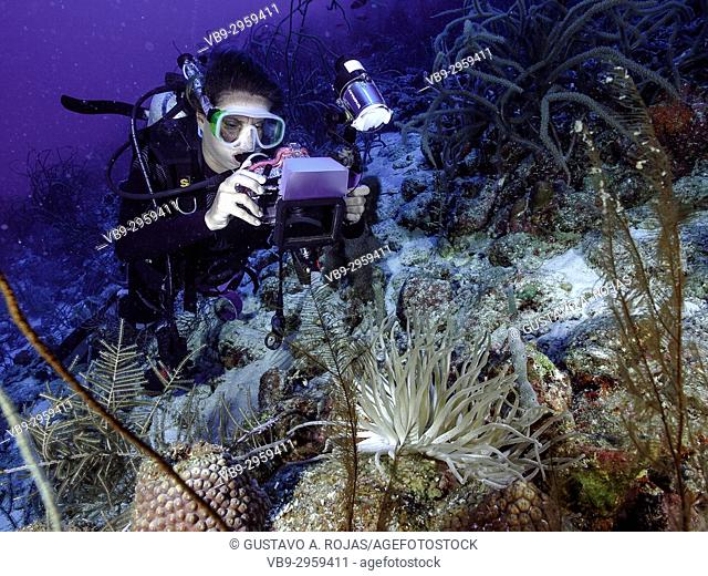 Caribbean Sea Los Roques, woman Scuba-Diver underwater photographer Tour, Underwater, Venezuela, Yellow Tube Sponge