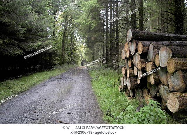 Forest road and log stack, Baronstown, Ballynacarrigy, County Westmeath, Ireland