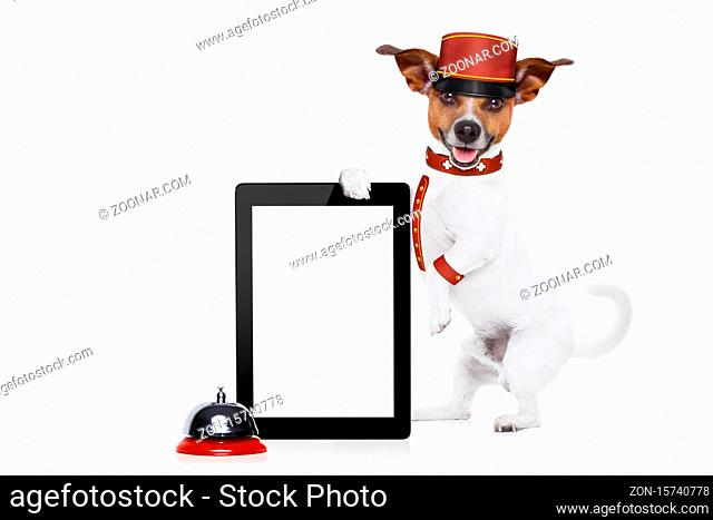 jack russell bellboy dog holding a blank and empty tablet pc computer screen at hotel, where pets are welcome and allowed, isolated on white background