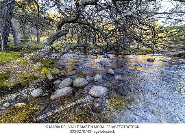 River Lozoya in La Angostura. Rascafria. Madrid. Spain. Europe