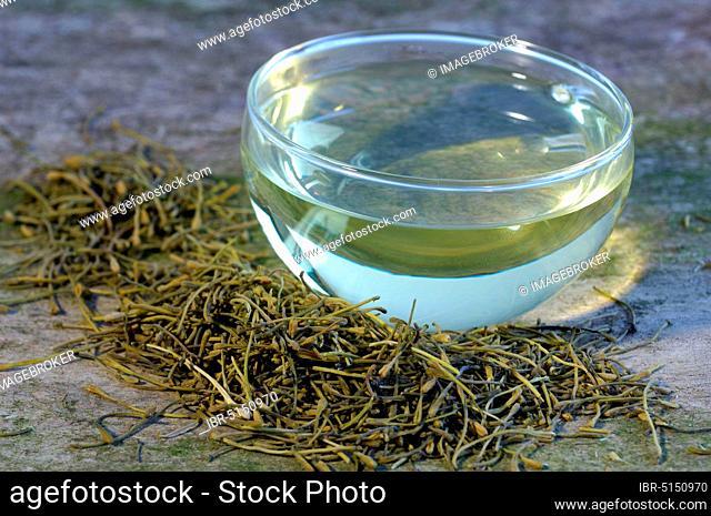 Cup of Jin Yin Hua tea (Lonicera caprifolium) (Lonicera japonica), goat leaf, Jinyinhua