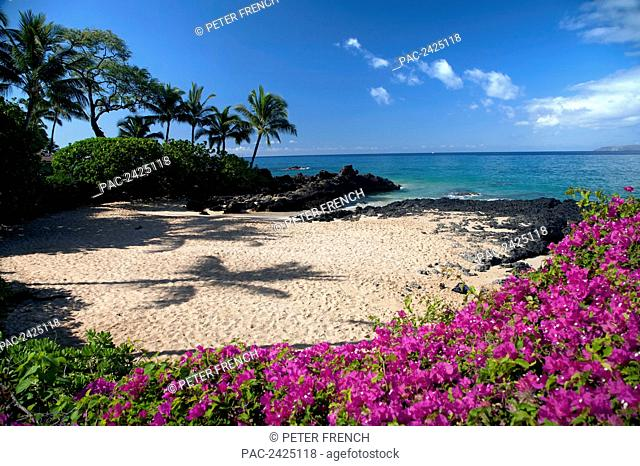 Hawaii, Maui, Makena, Bougainvillea flowers at secret beach