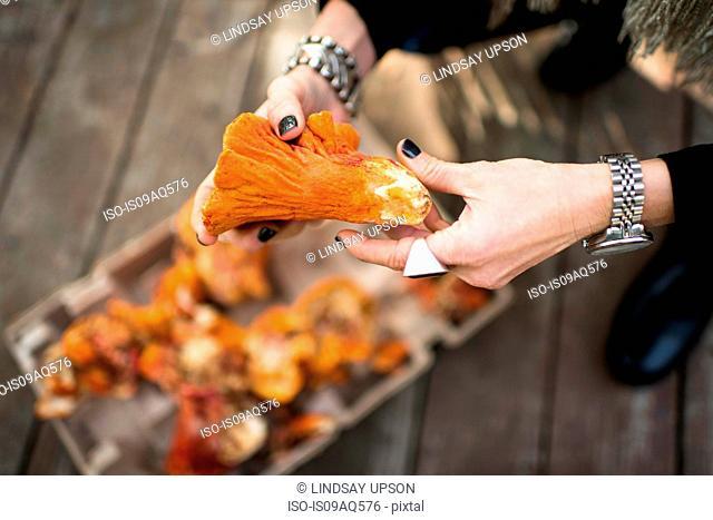 Womans hands holding lobster mushroom