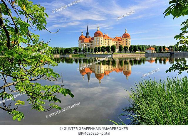 Castle pond with Moritzburg castle, near Dresden, Saxony, Germany