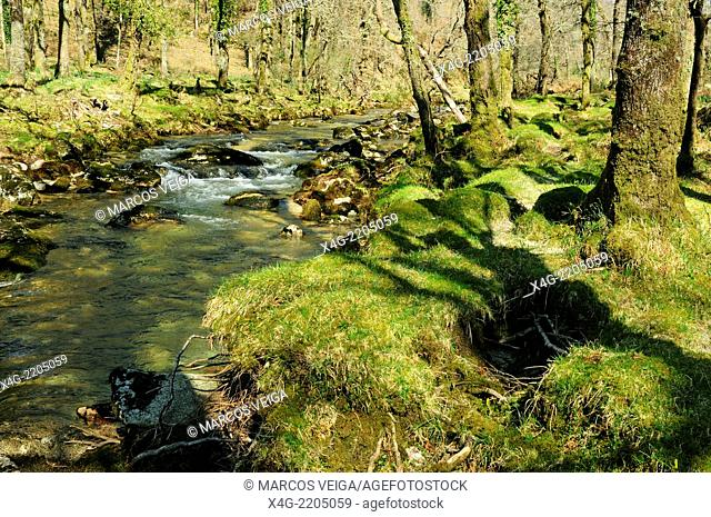 River Xesta and forest, Galicia, Spain