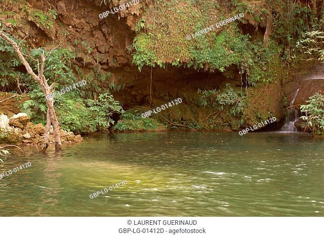 Forest, Nature, Seis Cachoeiras Park, Bonito, Mato Grosso do Sul, Brazil