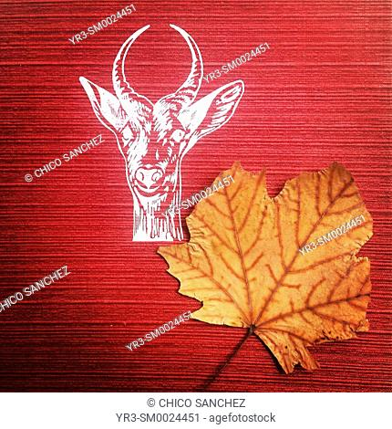 A dry leaf found in a red book decorated with the head of a deer in Librero en Andanzas second-hand bookstore in Mexico City, Mexico