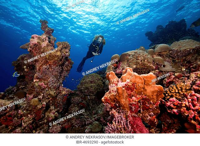 Female scuba diver swims next to a coral reef, Fuvahmulah island, Indian Ocean, Maldives