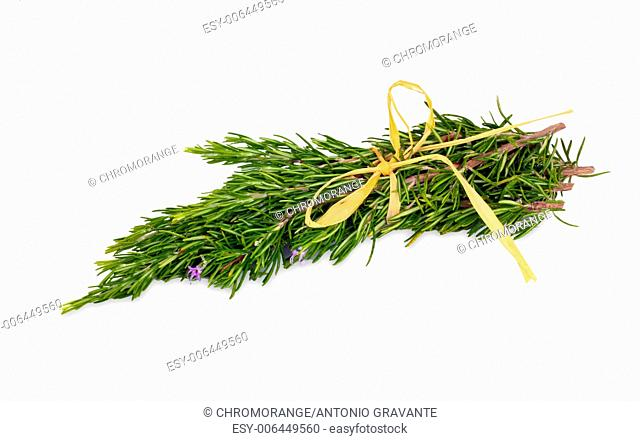 Rosemary herb leaf sprig in flower isolated over white background