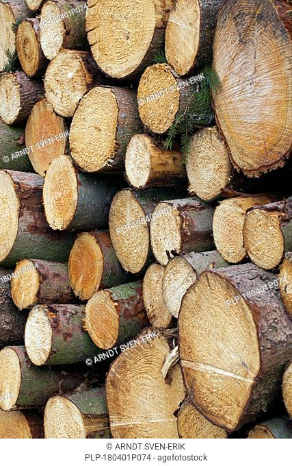 Stack of cut Norway spruce (Picea abies) logs, firewood used as wood fuel