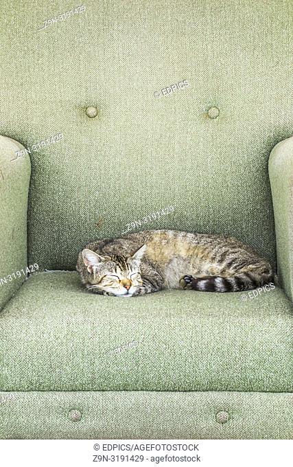 cat relaxing in an armchair placed on a sidewalk, quarteira, algarve, portugal
