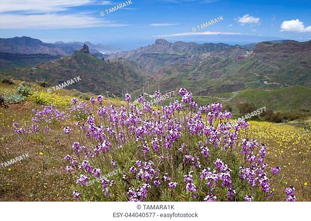 Gran Canaria, Caldera de Tejeda in April, Flowering slopes, Cirrus Clouds