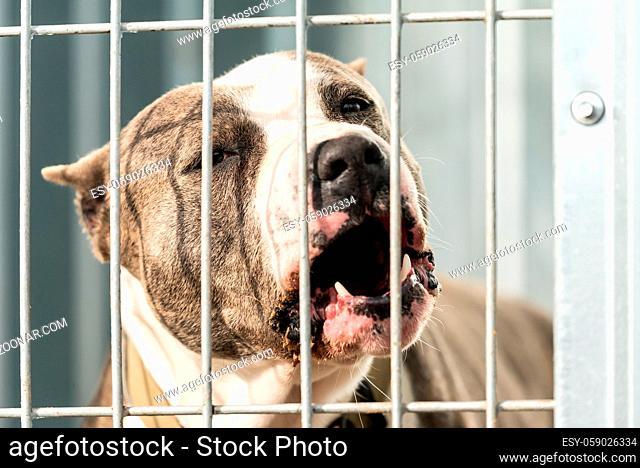 Dog at a homeless dog shelter
