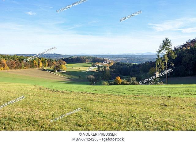 Bergern im Dunkelsteinerwald, forest Dunkelsteinerwald, raised hide, Wachau, Lower Austria, Austria
