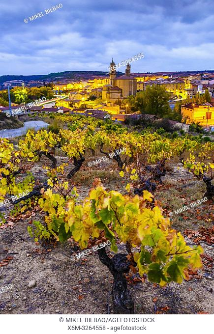 Vineyards in autumn. Elciego village. Rioja alavesa county. Alava, Basque Country, Spain, Europe