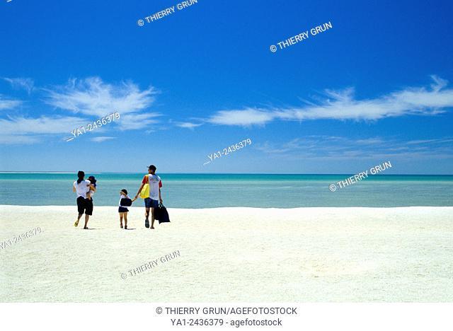 Australia, Western Australia, Shark bay, Haridon Bight, Shell Beach, beach composed only of small shells Fragum erugatum /