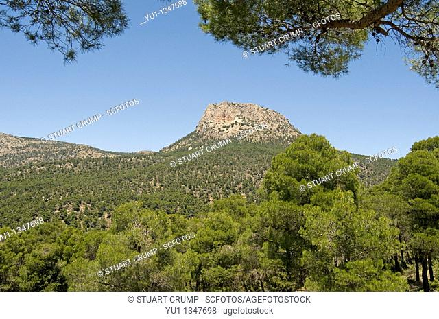 Sierra de Espuna National Park, Region of Murcia, Spain, Europe