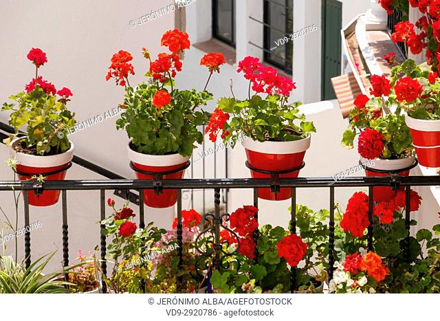 Geranium flowers in a pot and street, typical white village of Mijas. Costa del Sol, Málaga province. Andalusia, Southern Spain Europe