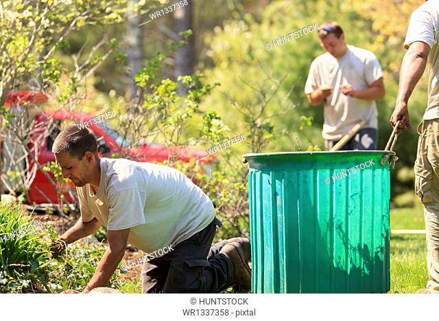 Landscapers clearing weeds from a garden into a bin