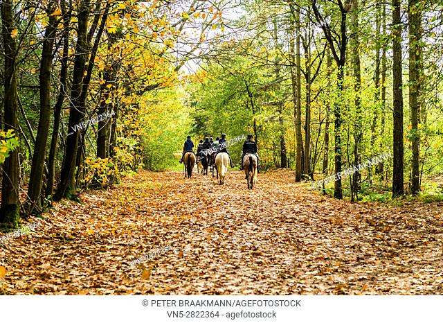 Rucphen - 29-10-2013 - Group of horse riders in the forest in autumn