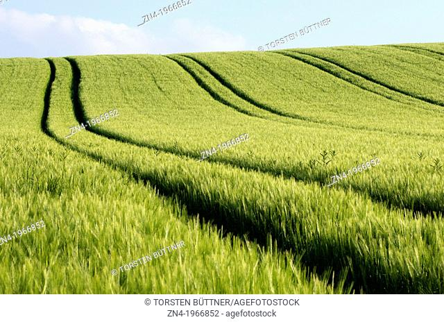 Farming Machine Tracks in a Wheat Field near Bad Schallerbach, Upper Austria, Austria