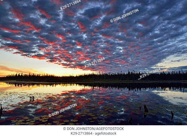 Dawn skies reflected in a beaver pond, Wood Buffalo National Park, Alberta, Canada