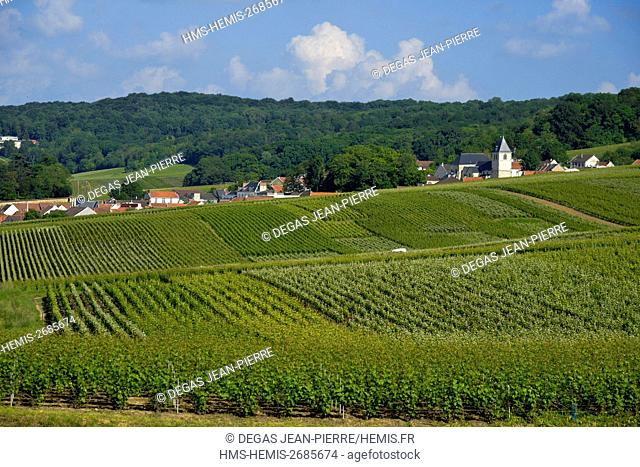 France, Marne, Ludes, mountain of Reims, vineyard of Champagne with a background church