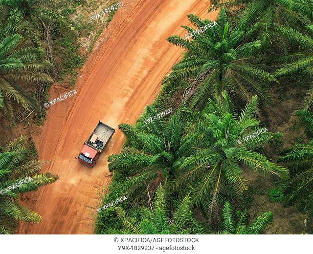 Cars and trucks cutting through the vast palm vegetation in Johor, Malaysia