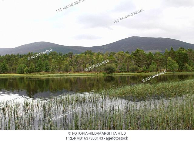 Loch Morlich, Cairngorms National Park, Central Highlands, Highlands, Scotland, United Kingdom / Loch Morlich, Cairngorms Nationalpark, Zentrale Highlands