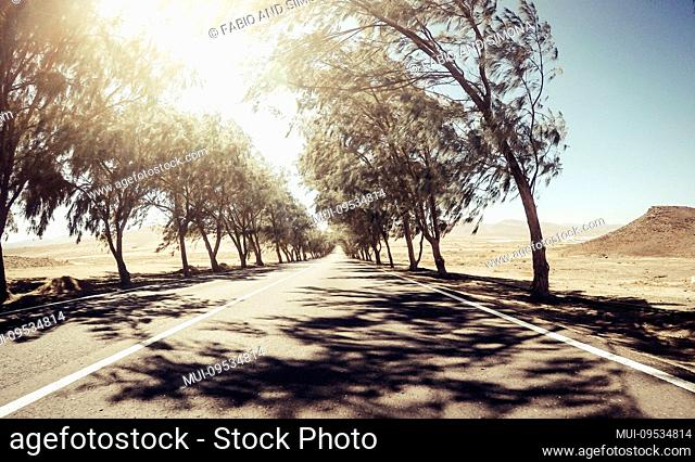Scenic long asphalt road with trees on both sides and sun light at the end in background - windy and wild desert nature outdoor aroung -concept of travel and...
