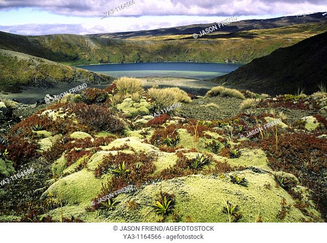 NEW ZEALAND, Central Plateau, Tongariro National Park  Alpine plants viewed looking towards the lower Tama lake