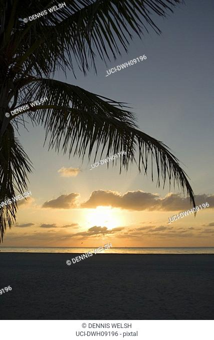 Silhouette of palm fronds at sunset