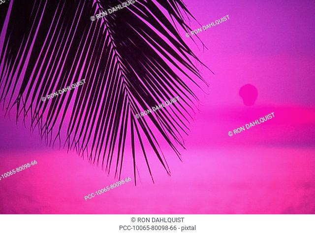 Close-up of silhouetted palm frond against fuschia sunset sky
