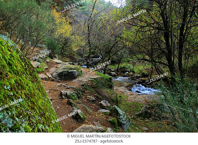 A twisty path leads between oaks and pine trees from El Paular to the El Purgatorio waterfalls, alongside the Aguilón river near Rascafría (Madrid autonomous...