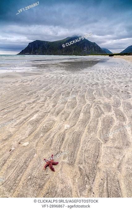Sea star in the clear water of the fine sandy beach Skagsanden Ramberg Nordland county Lofoten Islands Northern Norway Europe