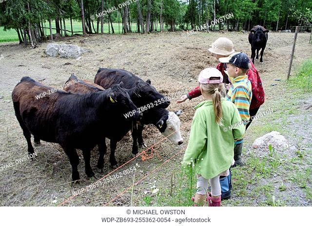 children and adult feeding cows Sastamala Finland