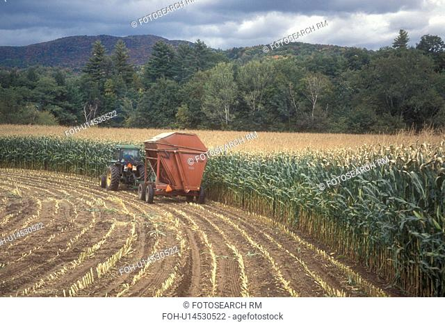 harvest, farming, fall, Middlesex, VT, Vermont, Farmer cutting his cornfield with a tractor in autumn