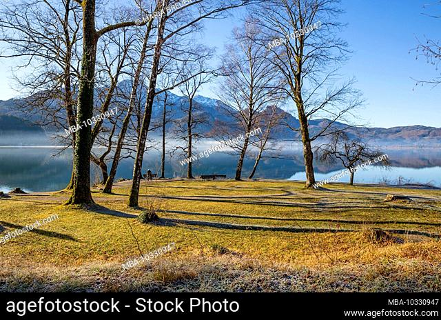 Kochelsee, Ufer, Bavaria, Germany, Europe