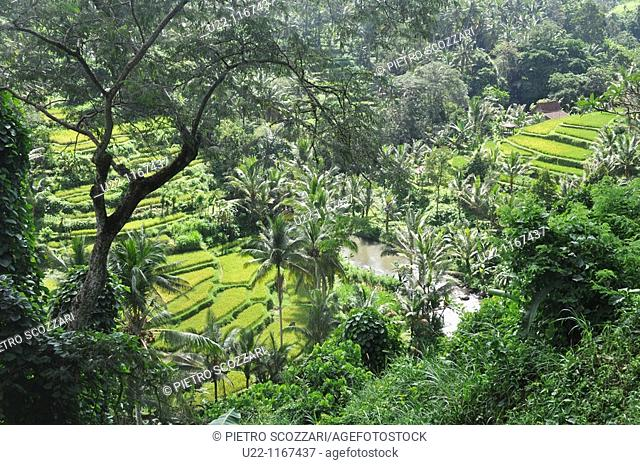 near Ubud (Bali, Indonesia): the Ayung river, by the Sayan paddies