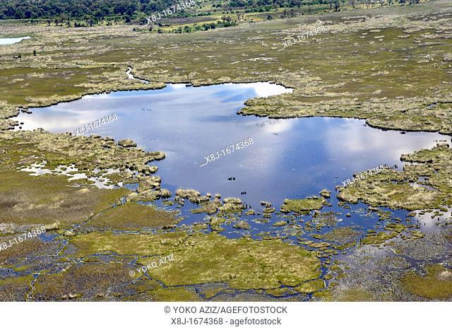 Okavango delta fly, Botswana