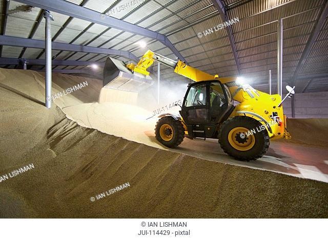 Dumper Truck Unloading Wheat Into Grain Store
