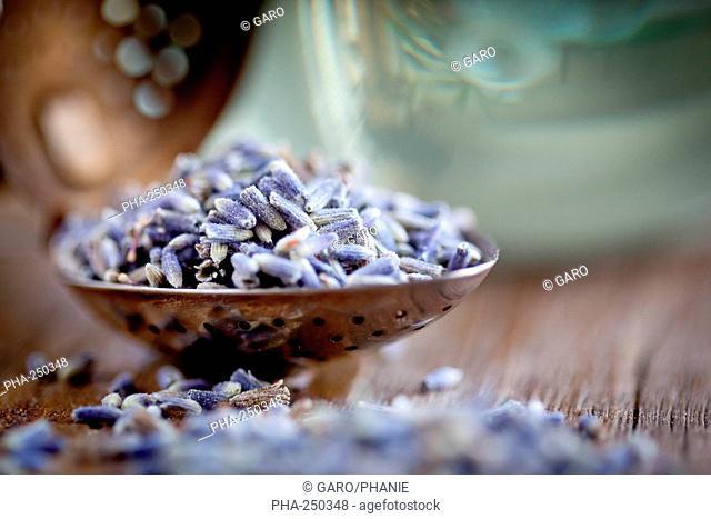 Lavender tea. Dried flowers of the lavender plant Lavandula angustifolia