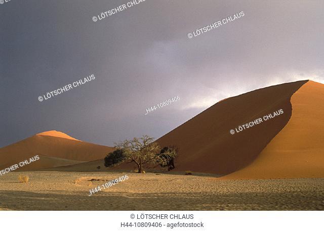 dune 45, Acazia, Africa, desert, Namibia, Africa, Namib Naukluft, national park, rainy season, sand dune, seas, sky