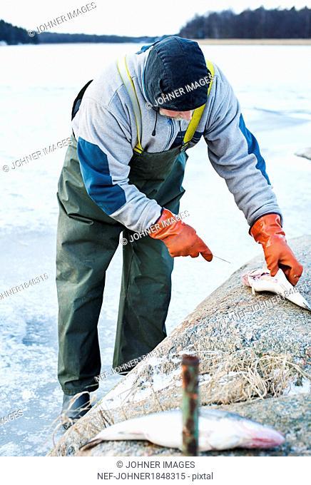 Man clearing fish