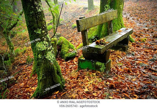Spain. Galicia. Pontevedra. Tui. Nature reserve of the Monte Aloia