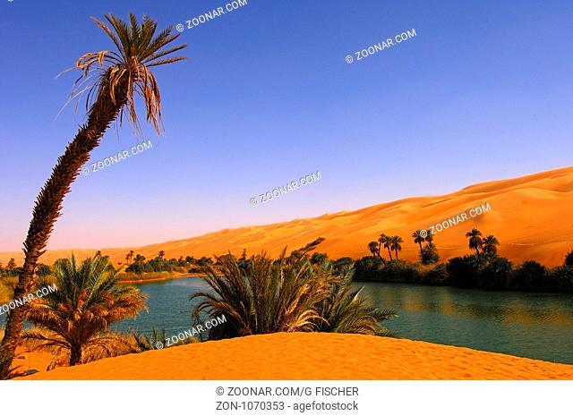 Palmen am Ufer des Um el Maa See im Ubari Sandmeer, Sahara, Libyen / Palm trees on the shore of the Um el Maa lake in the Awbari sand sea, Sahara desert, Libya