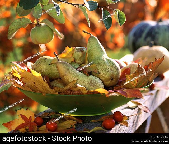 Pears on maple leaves