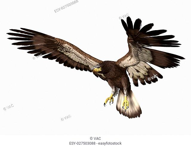 3D digital render of a landing bald eagle isolated on white background