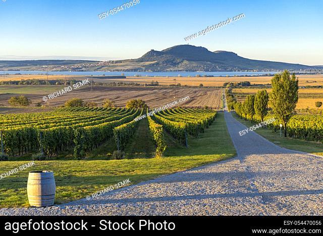 Autumn vineyards under Palava near Sonberk, South Moravia, Czech Republic